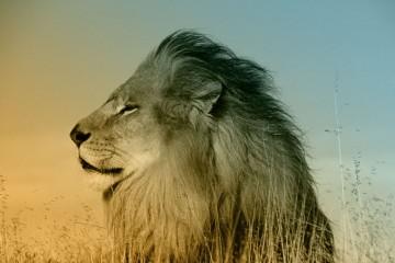 lion leader