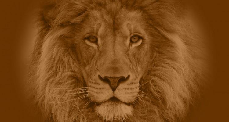 Strength of an African lion