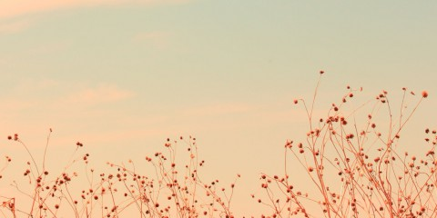 Sky brambles